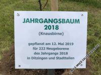 2018_05_jahrgangsbaum_023