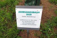 2021_05_21_pflanzung_jahrgangsbaum_2020002